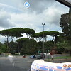 Rome trees