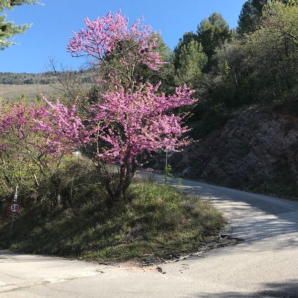 Road above Spello