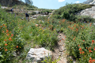 Flowers were amazing!  We were up above 8000' here.