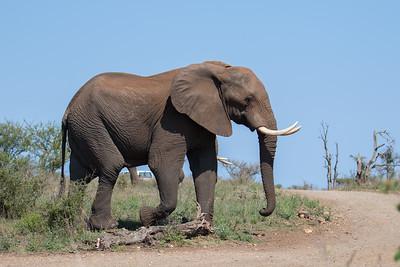 Olifanten bij Nthandanyathi Bird and Game Hide