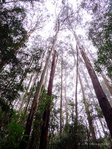 A walk in the rainforest. We stopped to take in the pristine Melba Gully in the Great Otway National Park with the only sounds being that of birds and the gushing waters of a nearby cascade