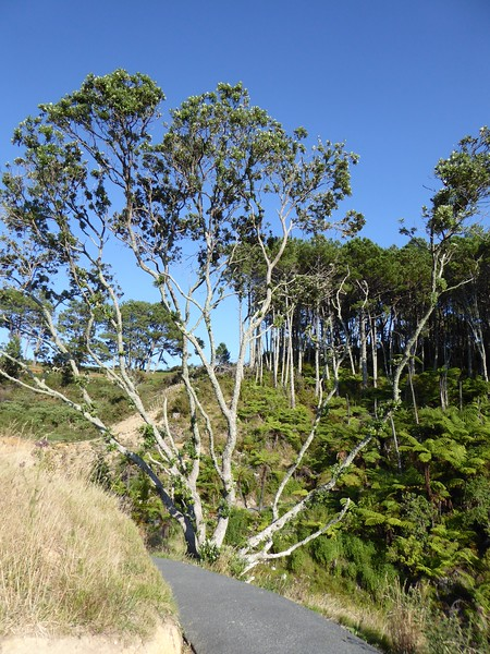 Along the track to Cathedral Cove