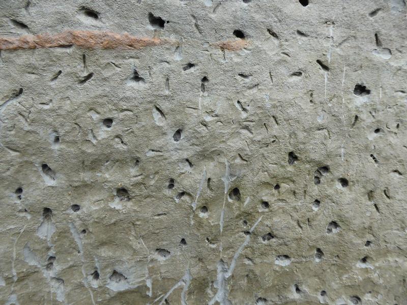 Weird holes in cliffs at Whitecliffs Walkway