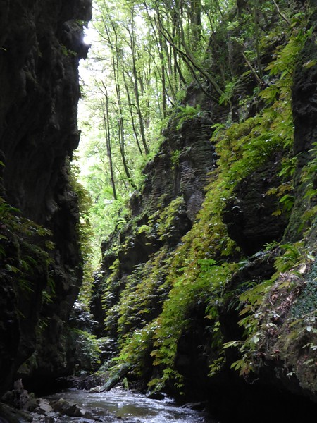 Green gorge at Glowing Adventures