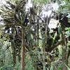 Moss and trees on Mt Taranaki walks