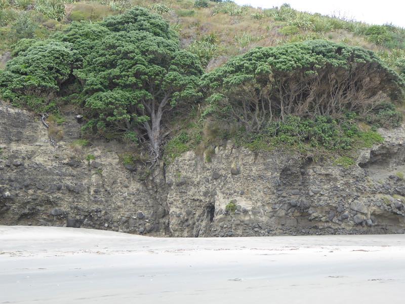 Trees in hillside along The Gap