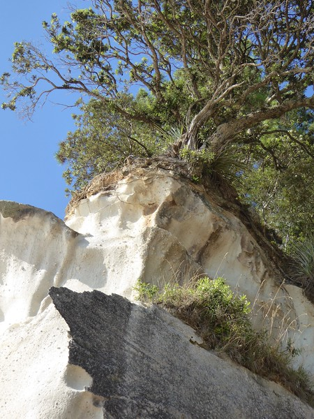 Looking up cliffs at Cathedral Cove