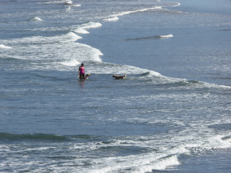 Lady and dogs enjoying the surf at Murawai Beach