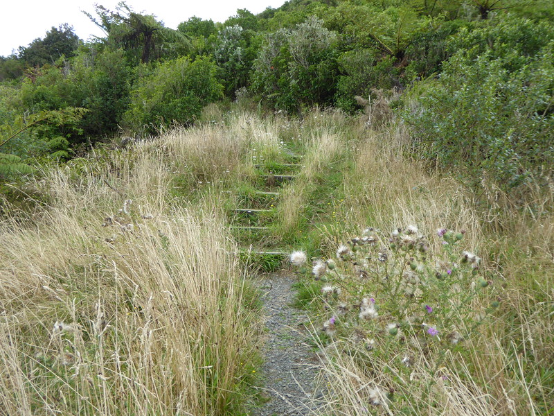Overgrown steps on the Tokatea Lookout Track