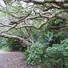 Karekare Falls Track walk