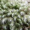 Close-up of lichen or moss at Mt Taranaki