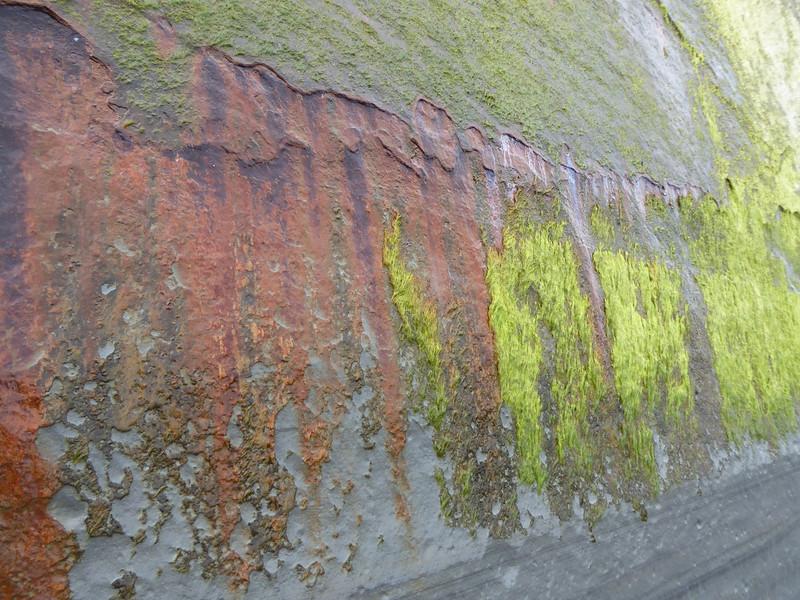 Moss and rust along Whitecliffs Walkway