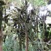 Moss and trees on Mt Taranaki
