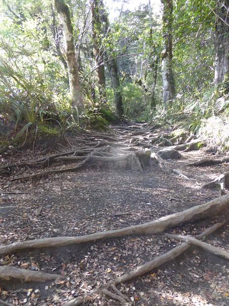 Along the Taranaki Falls Track