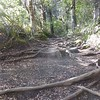 Along the Taranaki Falls Track