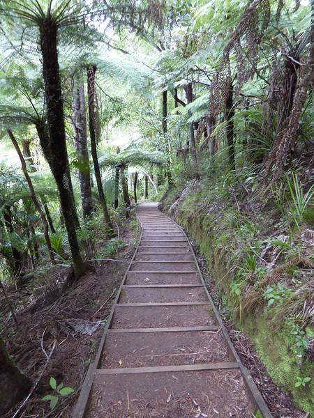 Stair section of walkway from Kitekite Falls