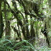 Dense forest on Mount Taranaki's Dawson Falls track
