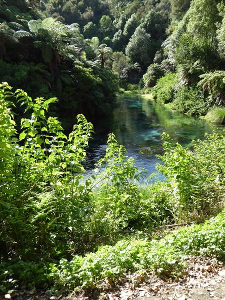 Te Waihou Blue Springs Walkway