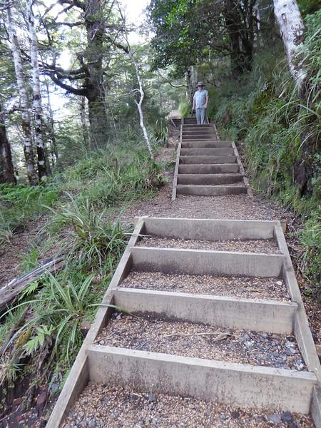 Many steps along Waitonga Falls track