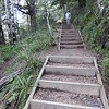 Many steps along Waitonga Falls track
