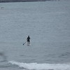Paddleboarder, New Plymouth