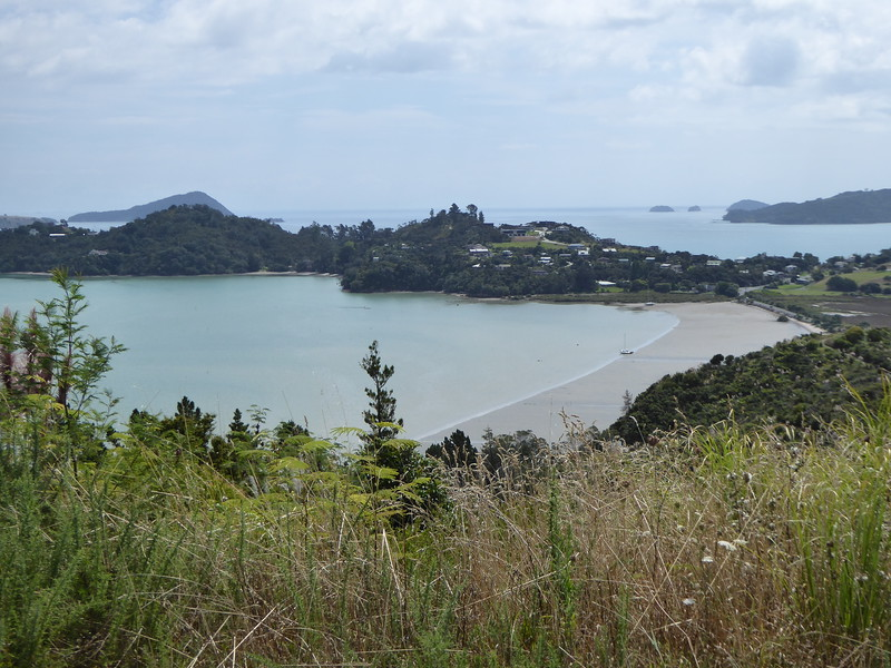 View from Kauri Block Track