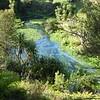 Te Waihou Walkway (Blue Springs)
