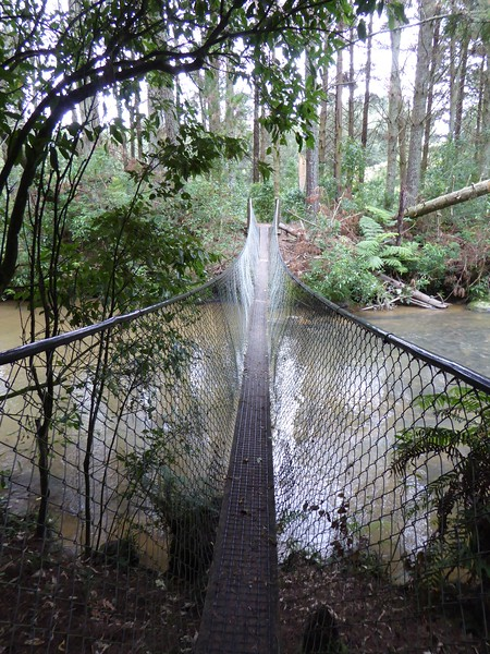 Swingbridge on Omaru Falls Track
