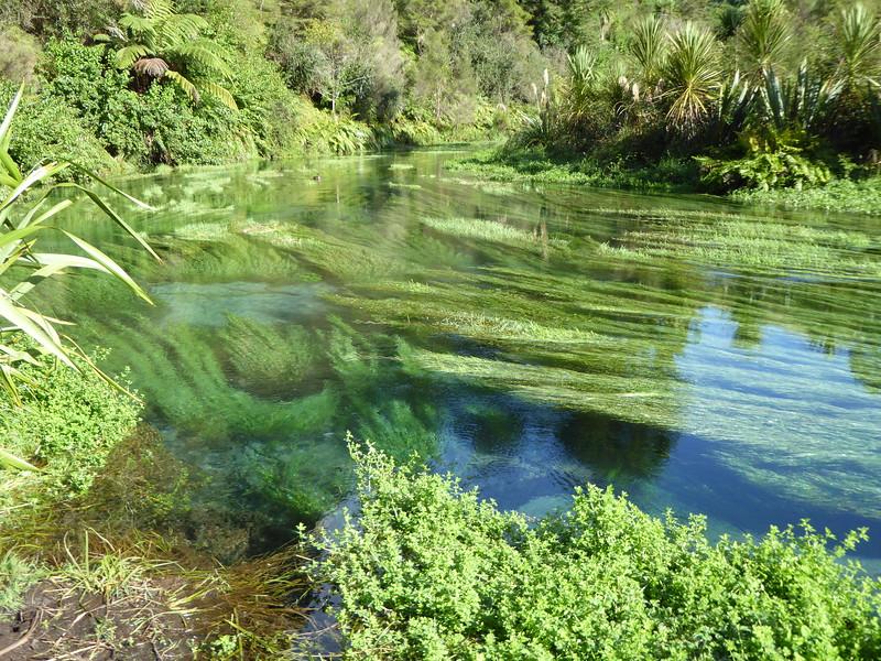 Blue Springs, Te Waihou Walkway