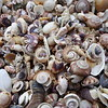 Shells at Opera Point