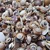 Shells at Opera Point