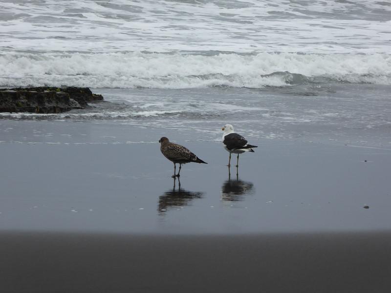 Birds at Tongaporutu