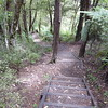 Steps along track at Goldies Bushwalk