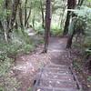 Steps along track at Goldies Bushwalk