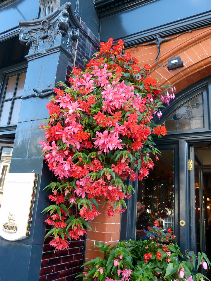 Flowers in front of the pub.