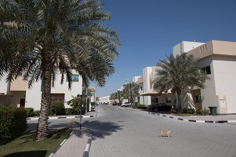 Katar bydlení compound