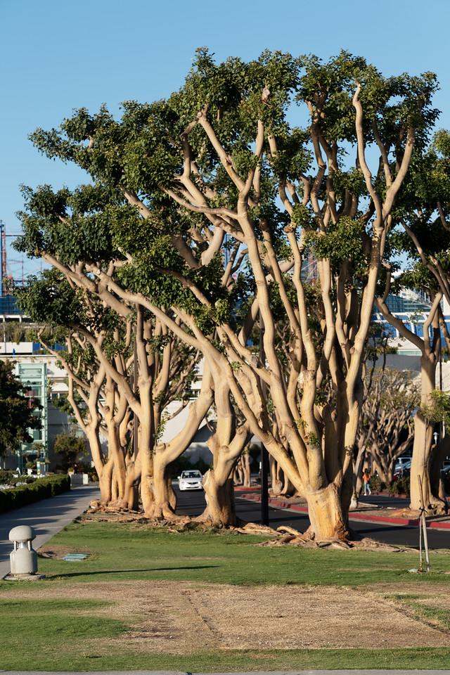 San Diego Harbor