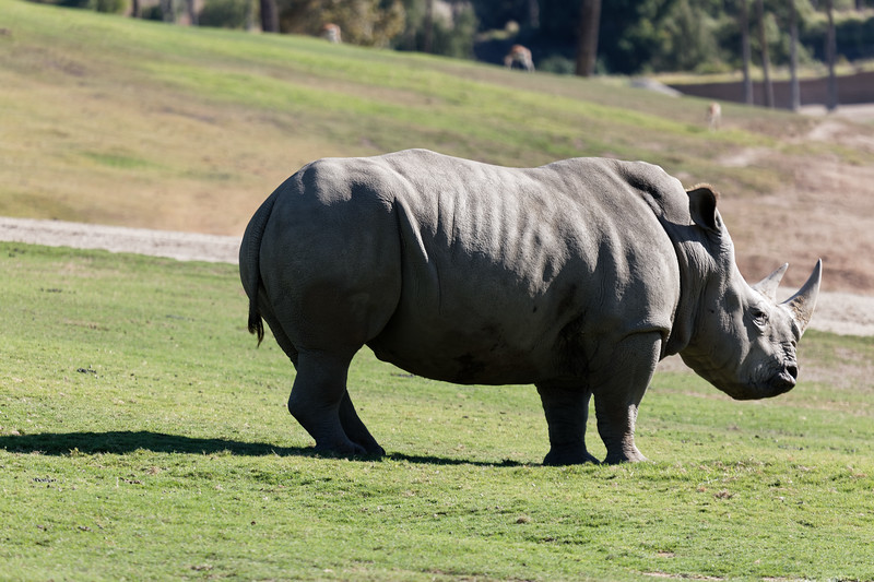 San Diego Zoo Safari Park, September 24, 2017