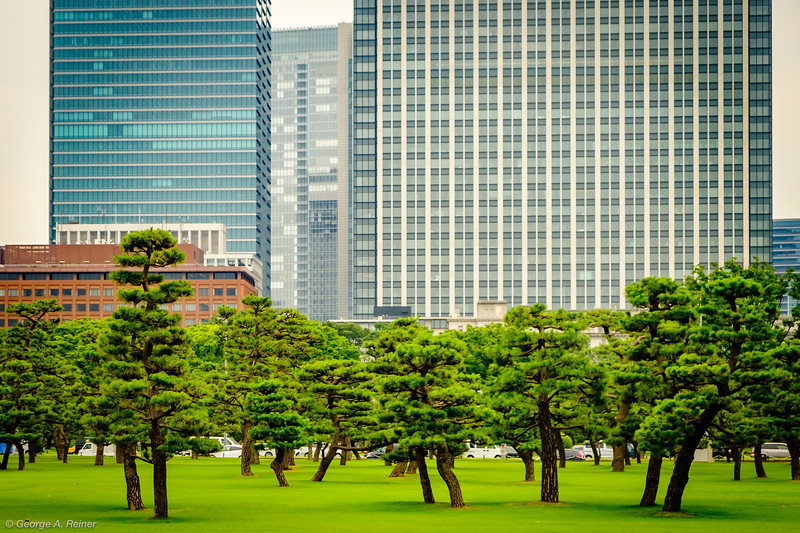 Front edge of Imperial Palace grounds contrasted against the city.