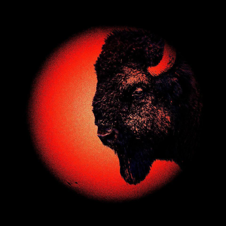 N7K_4087_bison