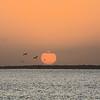 Pelicans and Carrabelle Beach sunrise