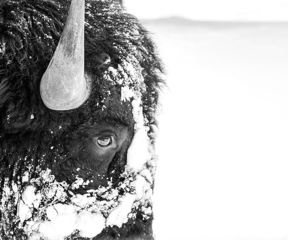 Bison bisecting frame