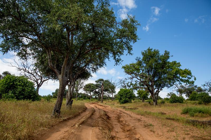 Botswana Chobezi NP safari