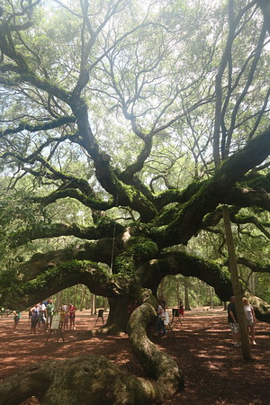 Angel Oak - July 29, 2017