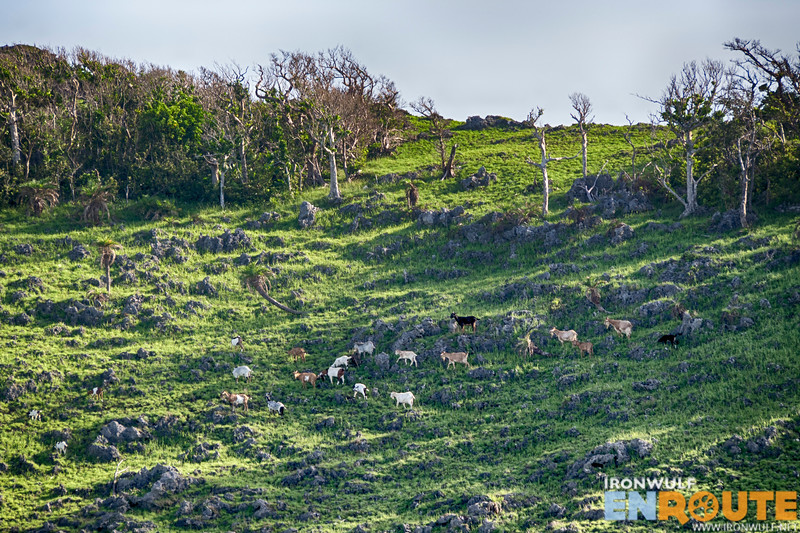 Goat grazing ground we passed by on our way back at the jump-off point