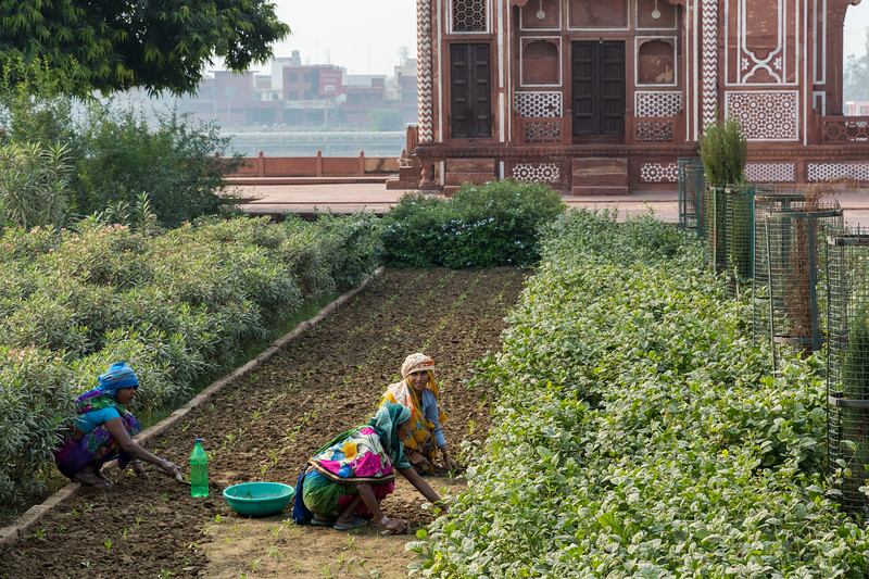 Garden workers at Itmad-ud-Dauluh, aka the Baby Taj.