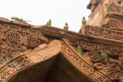 Parakeets on an ancient mosque, Qutb Minar, Delhi.