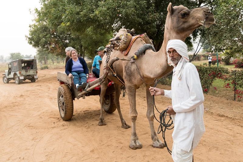 Pam, David P., and Kip  ride a camel cart back from the village.