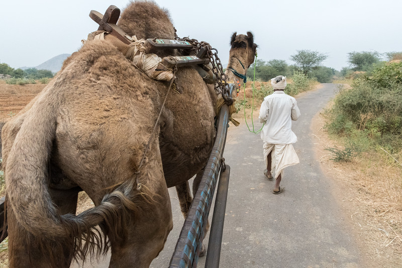 We ride a camel cart back from the village.