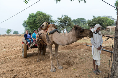 The Dartmouth group (Pam, David P.) rides camel carts to a local village.
